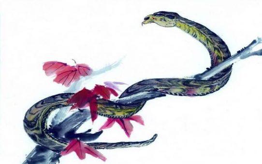 Chinese zodiac – snake